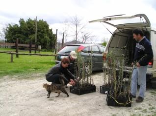 Remo porta le piantine di olivi autoctoni