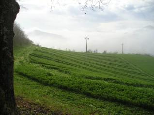 Aprile 2005, si disegna l'impianto 6x6 nell'erba medica
