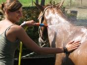 Rinfrescare i cavalli (se li avete)...